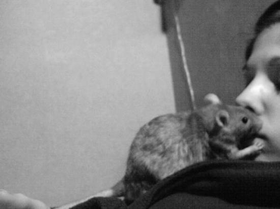 l'amour d'une ratte