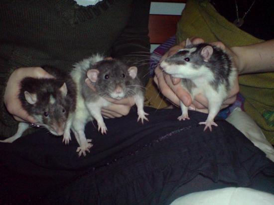 la famille (lignée N1) Whyski, Gallilé et Senghor