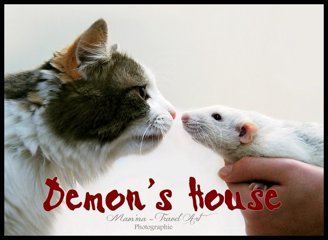 Raterie Demon's House
