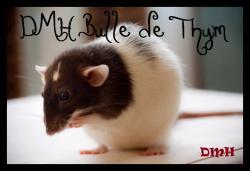 bulle-de-thyme-1.jpg