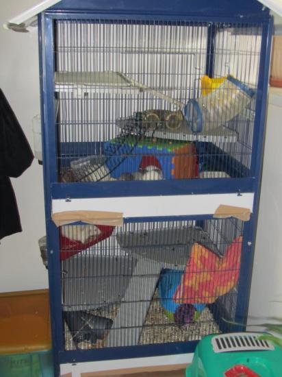Cage Orane.jpg
