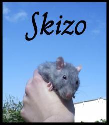 p-skizo.jpg